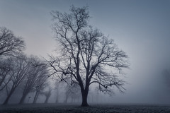 The Sound of Silence (Otto Berkeley) Tags: uk morning england mist cold tree london nature fog outdoors dawn early haze alone gloomy britain branches meadow peaceful mysterious lonely nationaltrust chill deserted morden parkland mordenhallpark