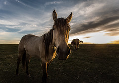 Can I Help You? (Terry L Richmond) Tags: blue sunset sky horse canada closeup clouds canon horseface highlights alberta prairie grazing