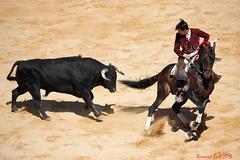 Manuel Manzanares (Bernard Bost) Tags: 2016 canon languedoc gard nmes corrida corridaderejn toro manuelmanzanares