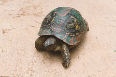 The painted Turtle (Blackphant) Tags: travel turtle explore morocco marrakesh discover palace