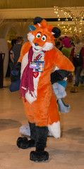 _DSC4244 (Acrufox) Tags: midwest furfest 2015 furry convention december hyatt regency ohare rosemont chicago illinois acrufox fursuit fursuiting mff2015