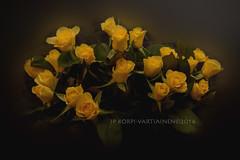 Yellow Roses (JP Korpi-Vartiainen) Tags: winter roses home rose yellow finland colorful decoration bunch talvi aalto cosy kuopio koti sisustus ruusu keltainen maljakko vriks talvinen asetelma pohjoissavo kimppu ruusukimppu jpko jpkorpivartiainenphotography2013 kotoisa