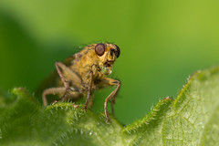 blowing bubbles (potterslass) Tags: water droplet blowingbubbles yellowdungfly