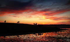 Em recoluta (Eduardo Amorim) Tags: sunset brazil horses horse southamerica field gua brasil criollo caballo cheval atardecer caballos agua tramonto sonnenuntergang dam prdosol barragem campo cavalos pelotas damm pferde cavalli cavallo cavalo pferd riograndedosul barrage pampa poniente champ anoitecer coucherdesoleil hest aguada hevonen campanha brsil chevaux entardecer crepsculo  amricadosul aude poente diga hst  amriquedusud   sudamrica suramrica amricadelsur  sdamerika crioulo caballoscriollos criollos  costadoce americadelsud  crioulos cavalocrioulo americameridionale caballocriollo auffangen eduardoamorim cavaloscrioulos