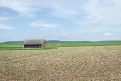 Horizon (stefan_wolpert) Tags: sky nature field landscape outdoors solitude outdoor horizon bluesky hut fields daytime agriculture midday landscapephotography swabianalb