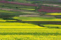 La fiorita (Le foto di Marietta) Tags: italy canon colori umbria norcia castelluccio fiorita