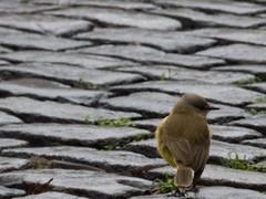 #5 - Un pjaro (Letua) Tags: pjaro pajarito bird piso floor empedrado lvm juegolvm