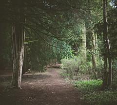 14/52 (skidu) Tags: trees light green nature forest pathway week14 2012 522012 52weeksthe2012edition weekofapril1