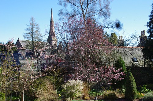 The garden looking towards the Auld Kirk in Spring.