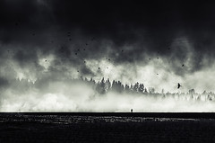 . (Latyrx) Tags: trees light sky field birds forest dark nikon exposure mood smoke single d7000