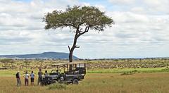 great spot to watch the great migration (Hctor del Hoyo) Tags: africa wild animals kenya nairobi safari mara animales len kenia masai elefante sabana masaimara rinoceronte libres safarifotogrfico animalessalvajes hectordelhoyo