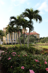 Ritz Carlton - Naples, FL (p.m.s.) Tags: florida palmtree naples hybiscus ritzcarlton tiburon