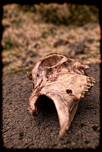 Skull, Faroe Islands.