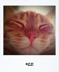 """#DailyPolaroid of 6-5-12 #221 • <a style=""""font-size:0.8em;"""" href=""""http://www.flickr.com/photos/47939785@N05/7181893846/"""" target=""""_blank"""">View on Flickr</a>"""