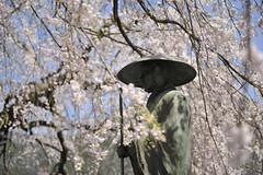 20120424 Hagiwara 9 (BONGURI) Tags: nikon gero cherryblossom  gifu hagiwara weepingcherrytree   d3s  afszoomnikkor2470mmf28ged weepingcheryblossom kenseiji kenseitemple