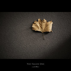 120 Quotes project | Quote 75 (Musaad (CJ)) Tags: autumn one leaf explore fallen