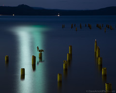 Pelican's night out (Dave Arnold Photo) Tags: longexposure usa bird night oregon river us photo image or wildlife arnold picture pic pelican columbiariver photograph astoria nightphoto waterfowl pylons ore brownpelican seabird riverlife davearnold darnold daveranoldphotocom