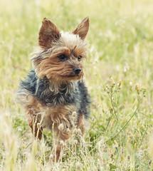 (andrei030) Tags: dog grass bokeh happiness perro desenfoque felicidad hierba