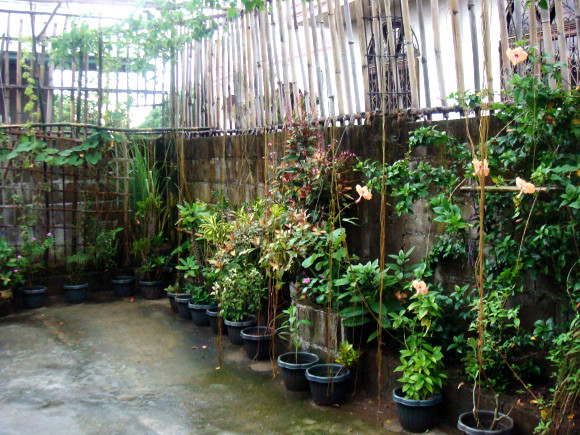 Our garden in Malabon