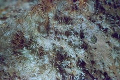anthodites