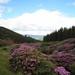 Loughglenbridge Bloom