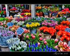 El Mercado de las Flores /The Flower Market (Miguel Angel SGR) Tags: street travel flowers blue light red orange flores holland color colour luz colors amsterdam yellow azul garden lights canal rojo nikon colorful europa europe market flor lila amarillo mercado trips holanda 1001nights turismo naranja lilium hdr colorido canales nikonistas d3000 nikond3000