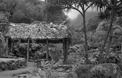 Iao Valley (bingley0522) Tags: hawaii maui diafine yellowfilter plusx iaovalley autaut leicaelmar50mmf35ltm canonivsb2