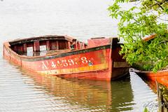 Cimetière marin, le Bono (DYC56) Tags: france art bretagne breizh bateau morbihan soe bois abandonné navire lebono darck epave nikond300 ahhhlafrance nikonpassion pixeliste bretagnesanspareil mordusdephotos bouboun56