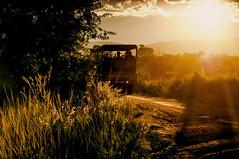 Afternoon Safari (pollylew) Tags: safarisafaritruckentabenigamereservesouthafrica