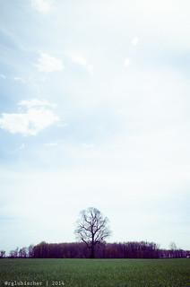 Lone Tree - III