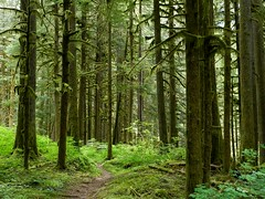 Baker River Trail (Ramona H) Tags: trees nature outdoors path trail northcascades bakerriver
