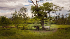 2CV - Explore (NeptuN | neptun-photography.com) Tags: animal photographie sony prairie chevaux nex7 sel18200le