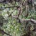 """O Dragão de São Francisco - São Francisco do Sul/SC - 15/05/2016 • <a style=""""font-size:0.8em;"""" href=""""http://www.flickr.com/photos/39546249@N07/26433043183/"""" target=""""_blank"""">View on Flickr</a>"""