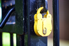 Yellow Padlock (cchana) Tags: park black yellow lock security safety cobweb protection padlock railings cobwebs