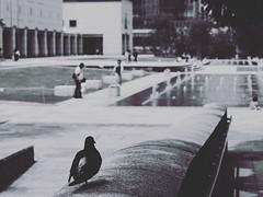 image (marchaconty) Tags: blackandwhite monochrome mono streetphotography yokohama minatomirai streetsnap