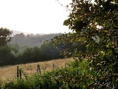Sommertag (CaroKaracho) Tags: summer tree green field forest sommer feld gras grn zaun wald baum