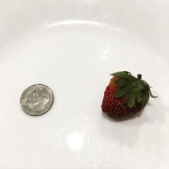 Ellie & Edison's first harvest (dime included for scale).