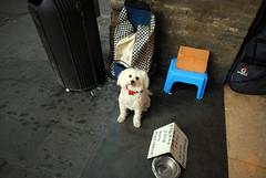 *** (Boris Rozenberg) Tags: street trip travel portrait dog money art face look animal digital sadness photo eyes sad angle pov snapshot poor wide streetphotography sigma snap moment begger decisivemoment sigma1020 sigmalend