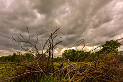 Angry Field and Angry Sky (thefisch1) Tags: sky cloud tree field interesting moody calendar angle cut anger brush hills angry kansas limbs stark flint turbulence flinthills oogle turbulent