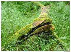 20160526-055_Verschiedenes.jpg (schmilar77) Tags: jahreszeit natur pflanzen landschaft wald baum frhling baumstamm bildbeschreibung
