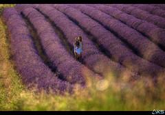 Girls in lavender (Karim SAARI - Photography) Tags: sunset summer sun france color nature canon landscape landscapes lavender 5d provence paysage lavande sud lavanda lavandes valensole provencealpescotedazur 500px ifttt