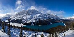 Peyto Lake (f_desmet) Tags: winter panorama lake snow canada mountains nature landscape alberta peytolake