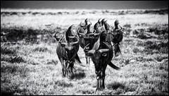 _SG_2016_05_Namibia_0191_1_IMG_0768 (_SG_) Tags: auto africa park trip elephant tree water car nationalpark wasser solitude desert hole national afrika giraffe ausflug elefant namibia herd baum strauch etosha gnus wildebeest watering wateringhole elefanten 2016 einde giraffen antilopen herde etoshanationalpark standpost wasserstelle etoshapark elefantenherde wildebai giraffenherde giraffesherd