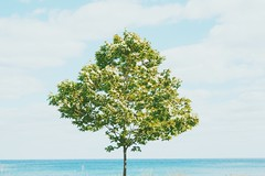 After a long busy week... time to relax (itsheridea) Tags: summer toronto tree beach mood relaxing bluesky minimal minimalism idyllic treeoflife naturelover treelover natureshooter vscocam justgoshoot