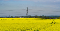 Power Lines (Preston Ashton) Tags: uk england sky field yellow clouds countryside wire power country seed cable line oil prestonashton