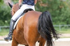 IMG_3064 (dreiwn) Tags: horse pony horseshow pferde pferd equestrian horseback reiten horseriding showjumping dressage reitturnier dressur reitsport dressyr ilsfeld dressuur ridingclub junioren ridingarena pferdesport springreiten reitplatz reitverein dressurreiten dressurpferd dressurprfung jugentturnier