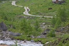 DSC_4905 (d90-fan) Tags: animals outdoors austria tiere sterreich natur bach pferde rauris hohetauern tauern krumltal raurisertal