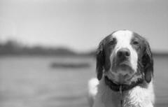 Harvey (yesimahuman) Tags: vacation lake film wisconsin 35mm cabin minolta kodak trix 400 filmphotography srt100 cabinporn