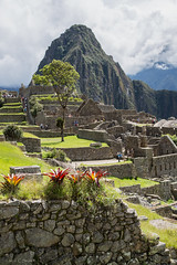 Machu Picchu - Bromeliads (cheryl strahl) Tags: peru southamerica inca ancient ruins cusco terraces andes machupicchu monuments archaeological sanctuary cultural ecosystems urubambavalley