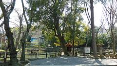 熊野神社市民の森(いの池広場)(Inoike Square at Kumano Shrine Community Woods)